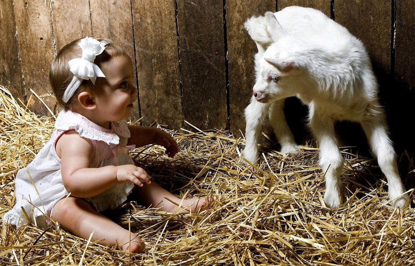 Смешные картинки про козье молоко